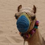 camil in dubai desert