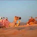 dubai-camels