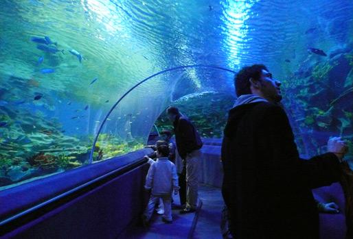 аквариум Тюркуазу