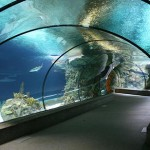 """Аквариумът """"Sea Life"""" – Беналмадена"""